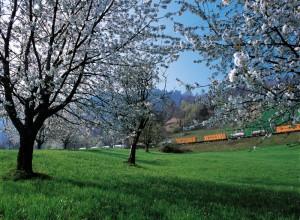 Güterzug in der Schweiz